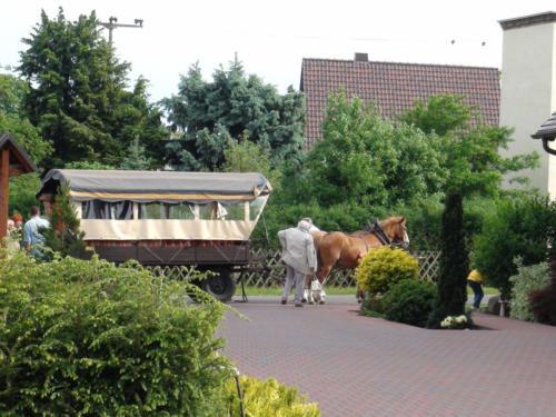 Kremser mit Pferden